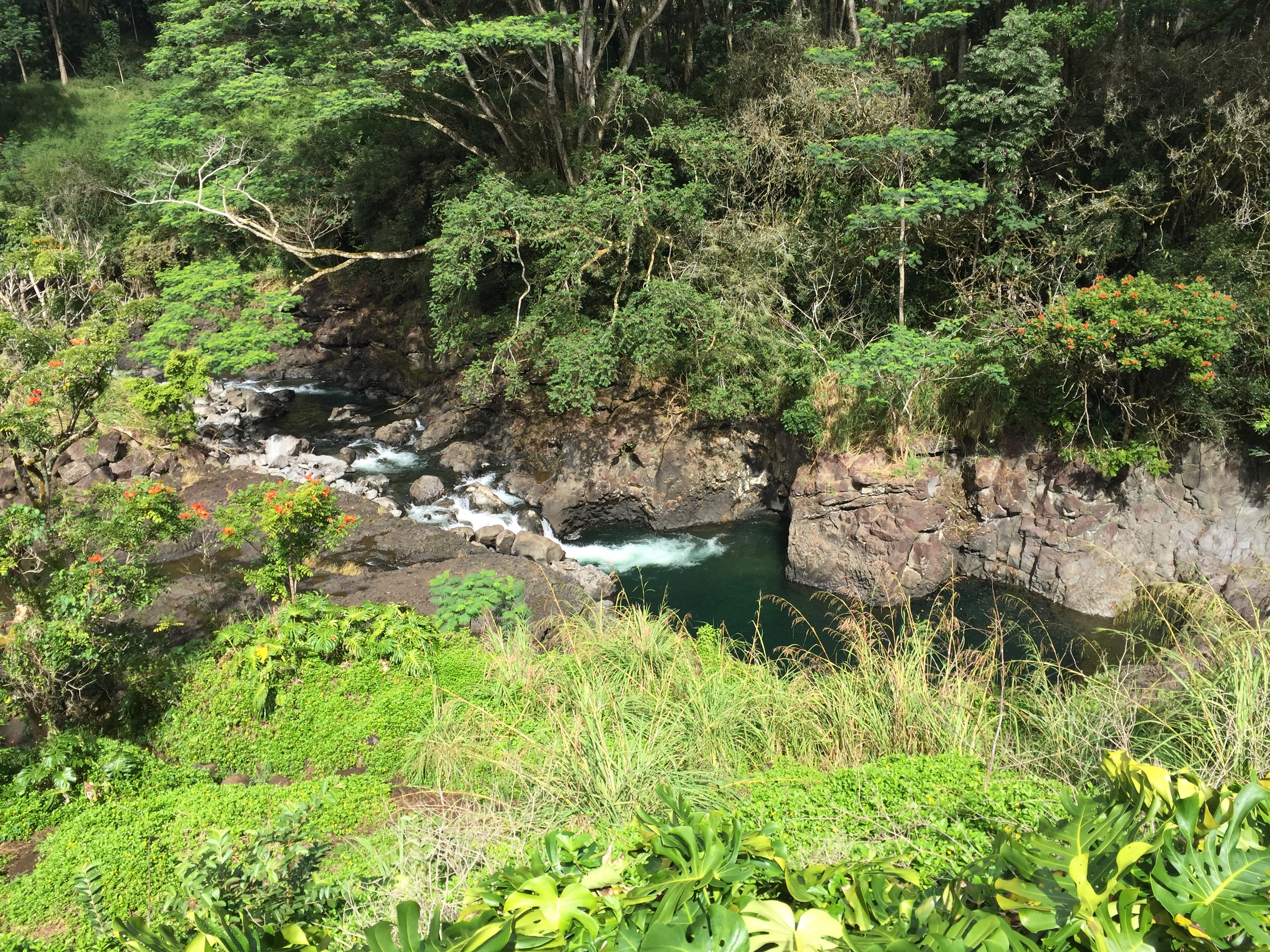 Fowler Fellow John Turner's Blog Post About Hawaii and Re-Wilding